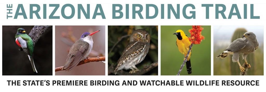 AZ Birding Trail header