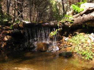 Turkey Creek Chiricahua Mountains