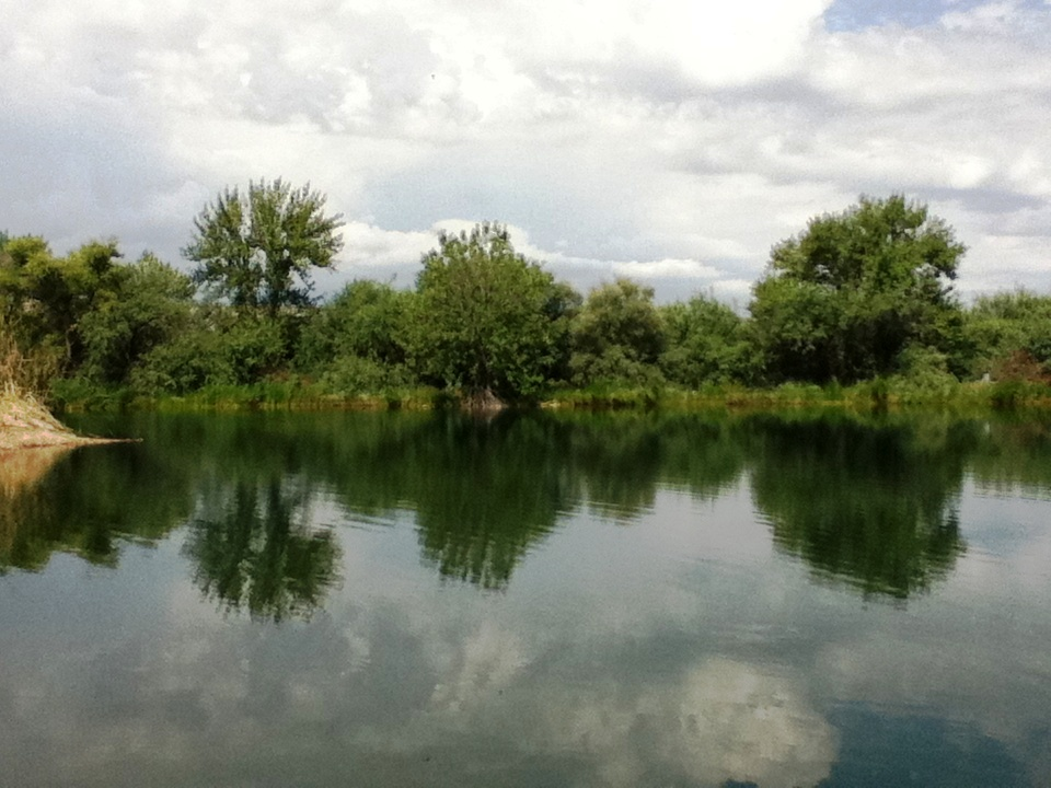 The pond along the Lower San Pedro that the Purple Martins love