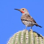 Gilded Flicker by Richard Fray