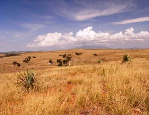 View of the grasslands