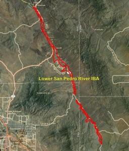 Lower San Pedro River IBA