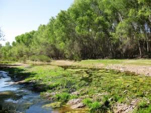 Lower San Pedro River