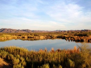 Ponds-at-Imperial-NWR
