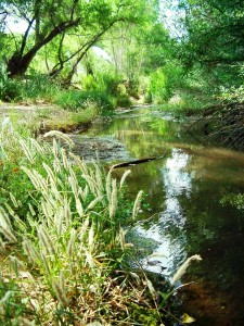 San Pedro River National Conservation Area by Esther 17