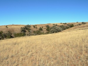 San Rafael grasslands