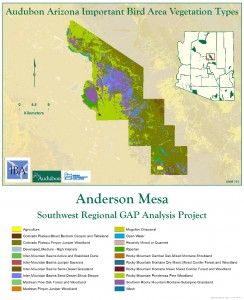 Anderson Mesa IBA Vegetation Analysis