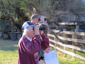 Volunteers at Spirit Tree Inn watching Azure Bluebirds by Richard Thompson