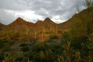 Tucson Mountains by Derek DeVries